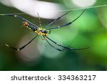 Colorful Spider In Web