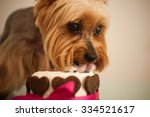 york dog in eats a small... | Shutterstock . vector #334521617