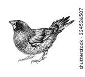 japanese finch. vector...   Shutterstock .eps vector #334526507