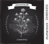 matricaria chamomilla aka...   Shutterstock .eps vector #334854353