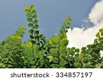 foliage in summer | Shutterstock . vector #334857197