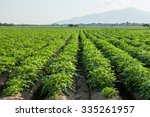 Potato Farmland  Chiangmai ...