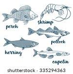 perch  capelin  herring ... | Shutterstock .eps vector #335294363