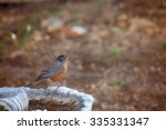 American Robin On Bird Bath. ...