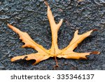 Leaf On A Wet Sidewalk Tile....