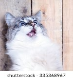 Portrait Of A Surprised Cat...