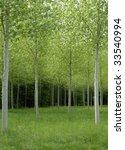 forest | Shutterstock . vector #33540994