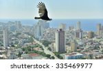 Small photo of The American vultures (Cathartidae Lafresnaye) soars over Havana Cuba. Birds eye view over city of Havana,Cuba.