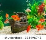 Goldfish In Freshwater Aquariu...