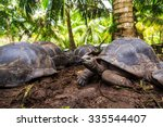 Four Giant Turtles Lying On Th...