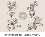 beets   hand draw sketch  vector | Shutterstock .eps vector #335779343