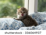 Stock photo close up of cute kitten sitting on the bed 336064937