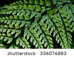 fern leaf in forest rainy... | Shutterstock . vector #336076883