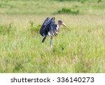 Marabou Storks   Kenya  Africa