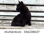 Stock photo black kitten 336238637
