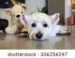 Stock photo cute dog and her doll 336256247