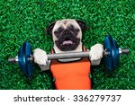 Pug Dog  Exercising Sport With...