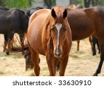 horses of  english breed in... | Shutterstock . vector #33630910