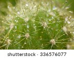 Drops Of Water On Cactus...