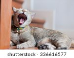 Yawning Cat   Selective Focus...