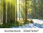 Sun Light In The Winter Forest...
