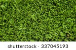 green hedge of thuja trees ... | Shutterstock . vector #337045193
