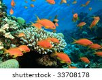 Beautiful Coral Reef And...
