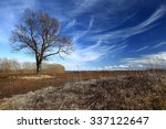 Lone Tree Without Leaves In...