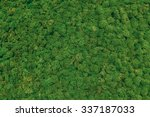 Green Moss Background. Close U...