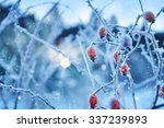 Red Rosehip Berries With Hoar...