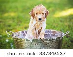 adorable cute young puppy... | Shutterstock . vector #337346537