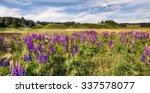 lupine blooms | Shutterstock . vector #337578077