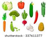 natural healthy carrot  potato  ... | Shutterstock .eps vector #337611377