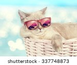 Stock photo cat wearing sunglasses relaxing in the basket against sea background 337748873