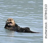 With The Sea Otter