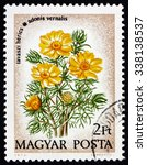Small photo of HUNGARY - CIRCA 1973: a stamp printed in the Hungary shows Pheasants Eye, Adonis Vernalis, Perennial Flower Plant, circa 1973