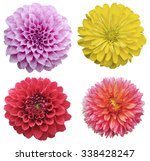 flower set isolated on white... | Shutterstock . vector #338428247