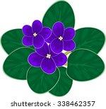 african violets  saintpaulia  | Shutterstock .eps vector #338462357