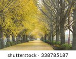 ginkgo maidenhair tree.and the... | Shutterstock . vector #338785187