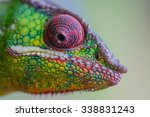 Green Colored Chameleon Face...
