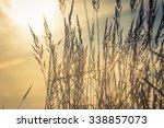 grass in the sun | Shutterstock . vector #338857073