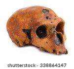 skull   Shutterstock . vector #338864147