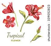 hand drawn hibiscus flower.... | Shutterstock .eps vector #339052823