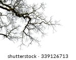 tree branch on a white... | Shutterstock . vector #339126713