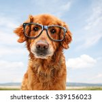 a close up of a golden... | Shutterstock . vector #339156023