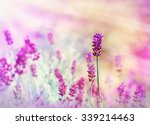 lavender flower lit by sun rays ... | Shutterstock . vector #339214463
