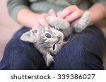 Cute little grey kitten lying on woman knees