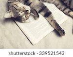 Cat Lies On A Book