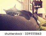 Black And White Cat Sleeping I...