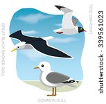 bird gull set cartoon vector... | Shutterstock .eps vector #339561023